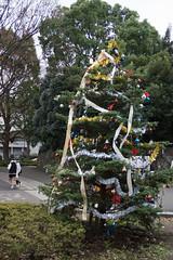 DSC02825.jpg (randy@katzenpost.de) Tags: winter japan yoyogikoen shibuyaku tkyto japanurlaub20152016