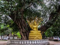 """Luang Prabang: le temple Vat Aham, à côté du Vat Visoun <a style=""""margin-left:10px; font-size:0.8em;"""" href=""""http://www.flickr.com/photos/127723101@N04/23757044612/"""" target=""""_blank"""">@flickr</a>"""