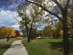 297/365/5 (f l a m i n g o) Tags: explore 365days project365 2016 15th october saturday season fall trees colorado arvada park