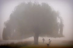 The Mist, The Tree, The Crow and the Photographer (paulinuk99999 - tripods are for wimps :)) Tags: paulinuk99999 bushy park london wildlife mist fog crow photographer tree lake landscape sal135f18za