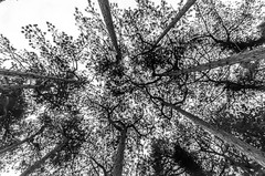 DSC_1265 (Andrew J Horrocks) Tags: formby pinewoods freshfield liverpool trees