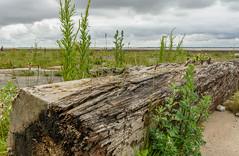 Hull-59 (stevefge) Tags: hull humber rivers dockside yorkshire landscape reflectyourworld