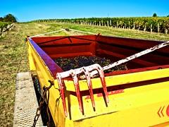 Les dents de la vigne ! (Patevy Damant) Tags: agriculture aquitaine exterieur jour medoc olympus paysage planmoyen vigne