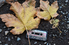 Their time has passed (James_D_Images) Tags: autumn fall leaves foliage maple fallen yellow decay cassette tape broken funny asfound ground dirt rocks leaf