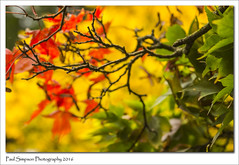 The Colours of Autumn (Paul Simpson Photography) Tags: leaves colour color automne autumn sonya77 sonyphotography imageof imagesof paulsimpsonphotography photoof photosof plantlife naturalworld nature normanbypark twigs october2016 redleaves autumncolours fall fallcolor