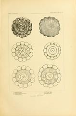 n172_w1150 (BioDivLibrary) Tags: antiquities indianart indians shellsinart smithsonianlibraries bhl:page=11258773 dc:identifier=httpbiodiversitylibraryorgpage11258773 manyhatsofholmes artist:name=katecliftonosgood artist:name=josephjones taxonomy