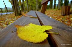 La Foglia (Arcieri Saverio) Tags: autunno foglia stillife nikon sigma color legno prospettive pace 1020mm yellow giallo nature green colori
