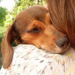 Aqu estoy de nuevo - I'm here again (nuska2008) Tags: nuska2008 nanebotas vida neruda dog olympussz30mr martaypa amor flickr gijn asturias ternura teckel love mascota perrita