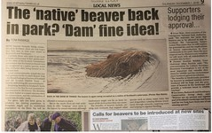 support for beavers in Badenoch & Strathspey (BSCG (Badenoch and Strathspey Conservation Group)) Tags: beaver reintroduction rewilding cairngorms strathy sunday herald