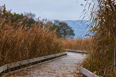 Promenade automnale (standdeb) Tags: lacdannecy lac chemin bois rservenaturelleduboutdulac roseaux nature canon 7d sigma 2470 hautesavoie france