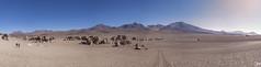 Desierto de Atacama (Demis de Haan) Tags: dessert bolivia south america atacama sand rocks sky dry land landscape scape panorama pano tree rock bomar rbol de piedra eduardo avaroa andean fauna national reserve