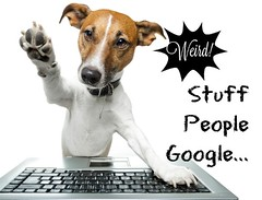 weird stuff people google (jancamilleri) Tags: animal animalsandpets brown canine choosing computer computerkeyboard computermonitor dog dogs ethnicity fun highfive humor intelligence internet isolated jackrussellterrier laptop learning looking maleanimal office pc searching sittingpretty small surfingthenet technology webpage wirelesstechnology wlan wearable