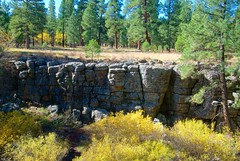 Fault Line (Herculeus.) Tags: 2016 bouldersstonerocks diciduoustrees evergreens faultline flagstaff museumofnorthernarizona oct trees westus16 outdoor landscape