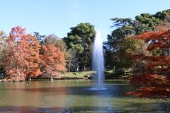 Maana de domingo en El Retiro (czernya_p3) Tags: estanque agua otoo patos fuente water spain espaa madrid retiro