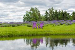 Lavender Etude, Nova Scotia (Golden_Arrow) Tags: lavender seafoam company nova scotia chairs