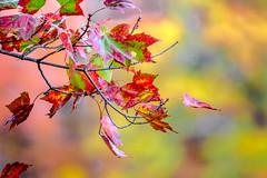 Fall was in Flower (Michael Bateman) Tags: kinnelon newjersey unitedstates us michael bateman photography michaelbateman