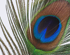 Feather (James Ritson (Affinity)) Tags: affinityphoto affinity serif mac windows video tutorials