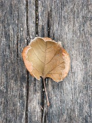 Leaf still life (mckenziemedia) Tags: leaf wood cracks crack old fall autumn iphone iphoneography shotoniphone shotoniphone7plus yellow weathered vintage light shadow