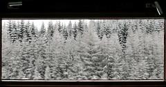 Behind the window... (radimersky) Tags: window okno za oknem behind drzewa trees zima winter snow nieg day dzie europa evropa europe pindlerv mln dmclx100 panasonic lumix panorama widok krajobraz landscape klamki handle micro 43 four thirds