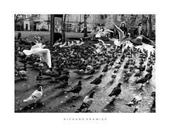 Form an orderly queue... (RichardK2010) Tags: rivergardens mono zuiko olympuspenf boids wherestippi hitchcockiantableau gulls birds wide zuiko12mmwideangle
