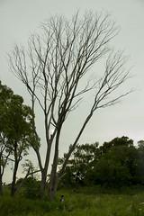 Proporciones (valentinsanchezm) Tags: tree nature naturaleza canon proportion film shortfilm people big