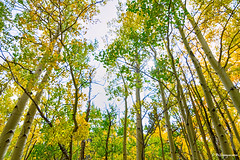 Mountain Breeze (Striking Photography by Bo Insogna) Tags: colorado rockymountains bouldercounty autumn fall foliage seasons golden nature landscapes colorful trees forest aspentrees jamesinsogna countryside travel fineartphotography