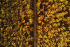 Pathway between Autumn (Sam_C_Moore) Tags: autumn drone forest lookingdown mavipro aerialphotography scenery pathway trees winter