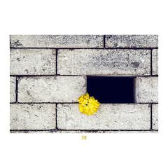 ETR PHOTOGRAPHY  ERSİN TÜRK - ETR0029 (ETR | Ersin Türk) Tags: ersintürk ersintürkfotoğraf etrfotograf etr wall flower yellow tuğla abstract ankara ekim 2012