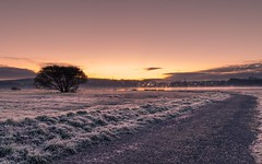 Winter Morning (Rich Walker75) Tags: outdoor path tree plymouth devon efs1585mmisusm eos100d canon morning dawn sunrise frost landscapes landscape winter