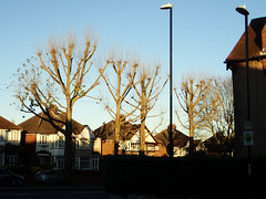 2016_11_280002 (Gwydion M. Williams) Tags: coventry britain greatbritain uk england warwickshire westmidlands tree trees