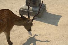 Deer eating map