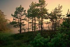 Viru raba (hommik) Tags: morning summer sun sunrise landscape estonia onceuponatime bog suvi hommik raba welcometoestonia