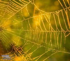 Web at Sunrise (The Suss-Man (Mike)) Tags: nature sunrise georgia dof bokeh web spiderweb gainesville backlit lakelanier hallcounty bokehlicious thesussman sonyslta77 sussmanimaging