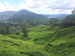 Day two, tea plantations