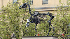 City of Westminster, London - UK (Mic V.) Tags: street city uk england sculpture horse london art public westminster square artist britain united capital great hans trafalgar kingdom gift londres fourth plinth artiste haacke