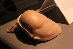Science World - October 15, 2015 (rieserrano) Tags: stomach bodyworlds plastination
