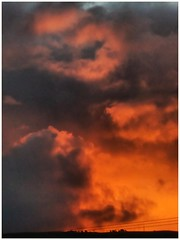 Nice thing to wake up to. (tubblesnap) Tags: sunrise dawn firy firey sky weather tree clouds cows field dramatic orange