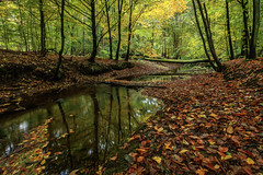 Herbstwald - Autumn forest (Petra R.) Tags: wald forest herbst autumn landschaft landscape bach creek outdoor heiter