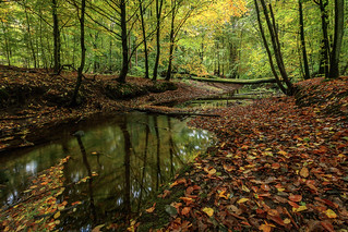 Herbstwald - Autumn forest