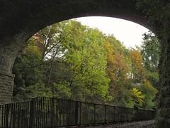 Autumn through the bridge (rbjag71) Tags: autumn colour trees nature bridge riverkelvin glasgow canonpowershot sx610hs