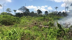 International Forest Day 2017 . . . (ericrstoner) Tags: rioerepecuru pancada pará slashandburn fire burn queimada internationalforestday2017 forest floresta diainternacionaldasflorestas2017 corteequeima brocaequeima broca rainforest amazon amazônia