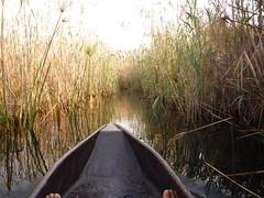 Ockavango Delta, Botswana - Sept 2016 (Keith.William.Rapley) Tags: ockavango ockavangodelta delta september2016 botswana rapley keithwilliamrapley papyrus canoe