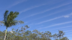 Unusual cloud formation, Sunday 16th Oct (tanetahi) Tags: cloud linear streaks ripple altocumulus undulatus brisbane sky