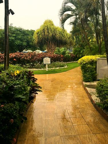 A Path Through The Rain