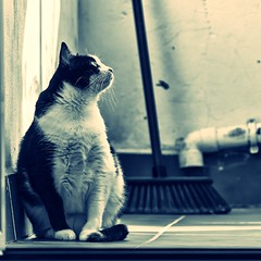 Tola vestida de luna (Tola blues) (Egg2704) Tags: gato gatos cat cats tola felino felinos animal animales naturaleza naturalia egg2704