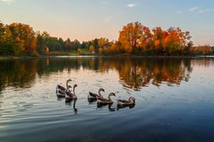autumn charm (Donald L.) Tags: island autumn fall color foliage canadian goose ontario canada