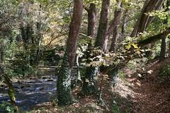 Autumn atmosphere ... (kostakai) Tags: drama greece aggitis forest nature landscape