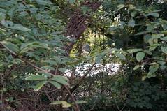 DSC09250 (jiving John) Tags: wisy walk riverthames richmond barnes