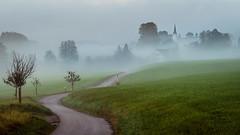 greetings from bavaria (klaus72) Tags: herbst nebel allgu bayern strasse mist fog bavaria autumn landscape landschaft sony sonyalpha a7 sel90m28g