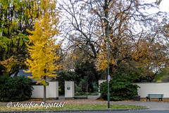 Herbst am Friedhofseingang (Bernsteindrache7) Tags: autumn panasonic lumix landscape park outdoor light leaf garden germany grab flora fauna tree nrw dsseldorf yellow